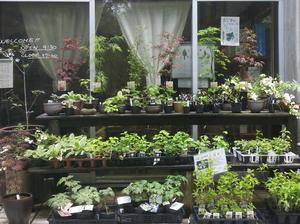 lepic-plants.jpg